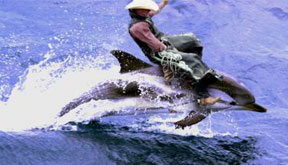 Dolphincowboy